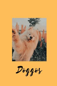 Cover, Dogs, Movie Posters, Life, Art, Art Background, Pet Dogs, Film Poster, Kunst