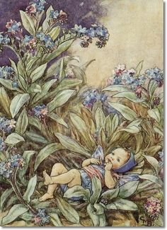 Cicely Mary Barker - Flower Fairies of the Garden - The Forget-Me-Not Fairy Archival Fine Art Paper Print