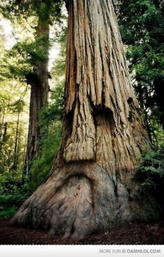Ents DO exist!