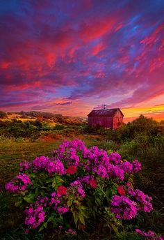 Sunrise flower meadow barn landscape in Wisconsin - photography by Phil Koch Beautiful World, Beautiful Places, Beautiful Pictures, Landscape Photography, Nature Photography, Photography Flowers, Sunrise Photography, Photos Voyages, Beautiful Sunrise