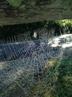 Spiders freak me out but they are amazing architects! I can appreciate their work OUTSIDE and not on me! Country Life, Country Living, Charlottes Web, Spider Webs, Water Drops, Light And Shadow, Amazing Places, Cabins, Mother Nature