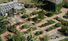 Economize e evite pesticidas ao criar seu próprio jardim de ervas