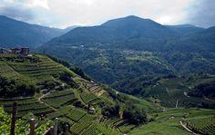 #Trentino #grappa #paesaggio  #Cembra