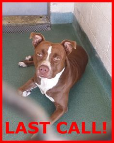 LAST CALL! LAST CALL! LAST CALL! Urgent Dogs of Miami · TANK (A1660787) I am a male brown and white Pit Bull Terrier. The shelter staff think I am about 3 years old. I was found as a stray and I may be available for adoption on 11/23/2014. https://www.facebook.com/urgentdogsofmiami/photos/pb.191859757515102.-2207520000.1420048423./899693140065090/?type=3&theater