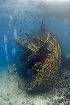 Rusting at the bottom of the ocean. Turned into a new home for marine life, this abandoned ship has new purpose.