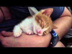 チュッとしたとたん、コロン♪飼い主のキスで眠ってしまう子猫にキュン – grape -「心」に響く動画メディア