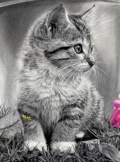 Gotcha (Kitten detail). Graphite, charcoal, and watercolor pencils on paper. Abraham Falcón Velázquez
