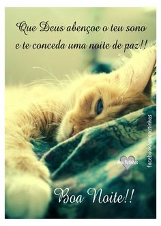 Boa Noite! Top Imagem, Happy Week End, Animals Amazing, Good Night Quotes, Good Afternoon, Dog Cat, Fox, Humor, Gifs
