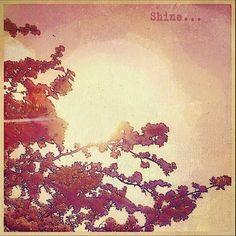 #shine #blossom #spring #retro Fine Art Print