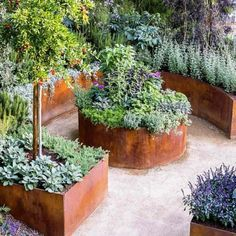 permaculture farming Keyhole raisedbed gardens are great
