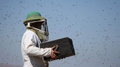 White House unveils new plan to save the bees | TheHill