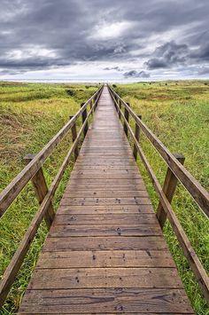 Quinalt Boardwalk by Lee Sie, via Flickr