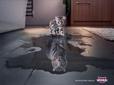 Whiskas - Nurture their nature #Advert & #Animals