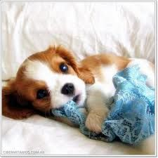Brown & white puppy ♥