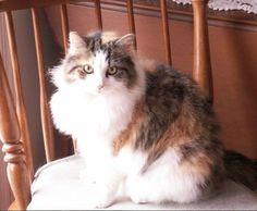 Our cat Calli. Tom & Jeri, Hedgesville, West Virginia