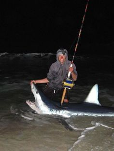 Huge mako shark caught from Florida beach  Surf fisherman catches and releases estimated 550-pound shark