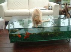 How to Make a Coffee Table Aquarium Coffee Tables Pinterest