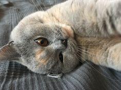 My littke kitty -Aquamarin fon Blau Prinz
