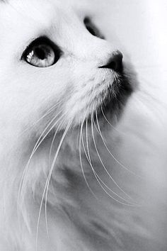 Beautiful cat !