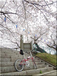 ©@akadai_1162さま / BoardWalk 2007年 / 明後日、入学式を迎える小学校。一足お先に、階段を登ります。