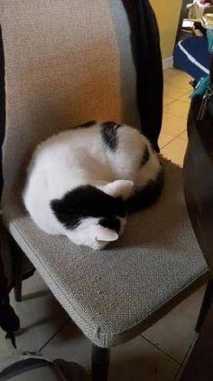 The Panda Butt Cat