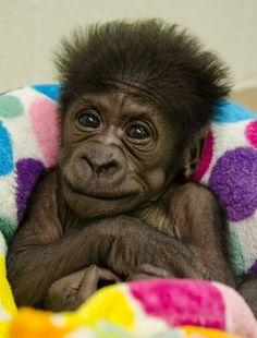 Kamina, child of Togo!