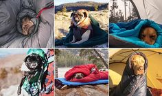 Camping With Dogs Instagram shows fed-up pooches who have had ENOUGH of hiking | Daily Mail Online