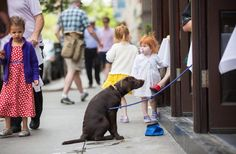 May 25, 2015 PIOTR REDLINSKI FOR THE NEW YORK TIMES Sit, Stella. Your Table Is Ready. A bill in Albany would allow dogs in restaurants' outdoor spaces, which would be fine with this Manhattan patron. Page A13.
