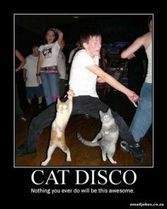 Funny Cat Photo: Cat Disco Happens. holy crap haha