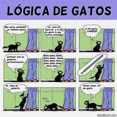 La lógica de los gatos... jejejje