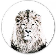 Magnetic wall sticker lion by Groovy Magnets