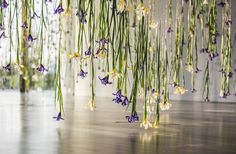 In The Iris exhibition, artist Rebecca Louise Law uses ephemeral art to explore the natural relationship between preservation and decay. Ephemeral Art, Flower Installation, Exhibition Display, Hanging Flowers, National Portrait Gallery, Iris Flowers, Art Archive, Flower Power, Nature