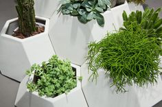Ma ce ta Modular Faceted Garden Pots by Pott in home furnishings  Category