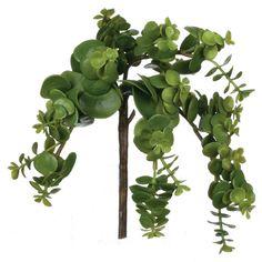 """Succulent, 8"""""""