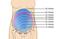 Der Fundusstand in der Schwangerschaft - so entwickelt sich die Gebärmutter.