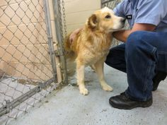 URGENT HIGH KILL SHELBY NC  Monday and Friday 2:00 - 4:00 p.m.   Tuesday, Wednesday and Thursday 12:00 - 4:00 p.m.     Individual Adoptions Cash Only   $60.00 Your Vet Spay/Neuter  $100.00 through Humane Society  Individual adoptions handled by Cleveland County Animal Control.    Rescues please send a copy of your 501C3, Vet referrals, Contact information to pointerpal@aol.com or call Garrett Bender at 704-476-6765.