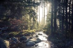 forest scenery by Lunox-baik on DeviantArt Beautiful World, Beautiful Places, Landscape Photography, Nature Photography, Forest Scenery, Fantasy Forest, Magic Forest, All Nature, Secret Places