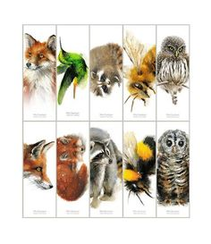 Animal Bookmarks - Set of 10 different bookmarks from original watercolors Fox Hummingbird Raccoon Bumble Bee Owl bookmark Free Printable Bookmarks, Christmas Gift Tags Printable, Watercolor Fox, Illustration Art, Illustrations, Hummingbird, Crow, Watercolors, Bee