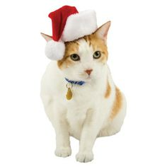 What's more adorable than a cat in a Santa hat? PetSmart: $6.99  #cat #holiday #petsmart