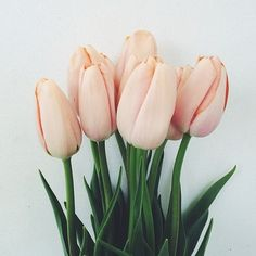 pale pink tulips, my fave flowers, look so pretty in the home