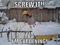 I'm tired of winter! Gardening in snow is becoming all too tempting. Starting my seedlings indoors, now! I'm tired of winter! Gardening in snow is becoming all too tempting. Starting my seedlings indoors, now! Seed Packaging, Screw It, Garden Club, Morning Humor, Winter Garden, Spring Garden, Dream Garden, Organic Gardening, Gardening Tips