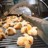Verein gegen Tierfabriken - Tierschutz konsequent