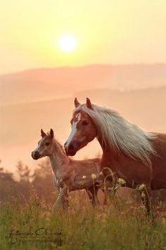 Mare and foal, sunrise.