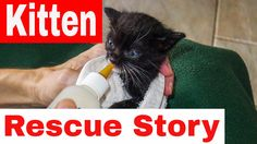 Kitten Rescue - Abandoned Cat Almost Dead - Cat Rescued And Adopted