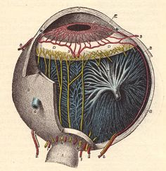 eye diagram antique medical journal