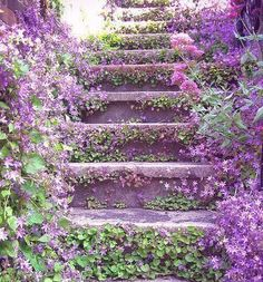 Lavender Stairs. To what wonderful thing could they be leading? Posted on Facebook by Wind University.
