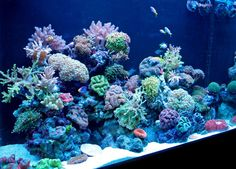 When you're in the reef aquarium retail business setting up a display reef tank is not about breaking records or having the biggest, brightest hardest to grow and keep stony corals.