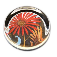 Gerbera Daisy - Small Round Glass Paperweight Laurel http://www.amazon.com/dp/B000HWK59M/ref=cm_sw_r_pi_dp_H4Rgxb1SN344E