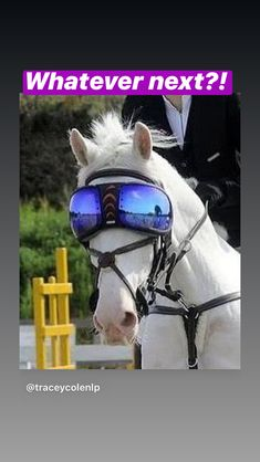 Have you seen these visors for horses? To stop flies mainly. Which is odd, because they make the horse look like a giant fly!! They're called Silver Whinnys.  #horse #madeforhorses🐴 #equestrianlife #equestrianstyle #equestrianlifestyle #equestrianproblems #equestrianprobs #horserider #horseriders #horseriding #horseriding🐴 #horseflies #horsefliessuck Equestrian Problems, Equestrian Style, Visors, Horses, Silver, Animals, Animais, Animales, Money