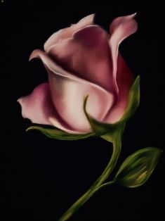 ideas for flowers painting acrylic rose fine art Watercolor Rose, Watercolor Paintings, Rose Paintings, Amazing Flowers, Beautiful Roses, Desenio Posters, Art Photography Portrait, Acrylic Painting Flowers, Lily Painting